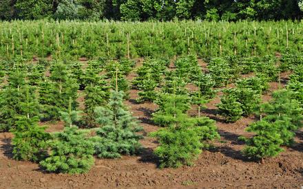 История чистого леса