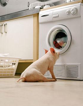 Как сделать стиральный порошок