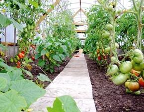 Для повышения урожайности овощных культур
