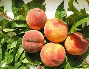 Секреты получения урожаев персиков