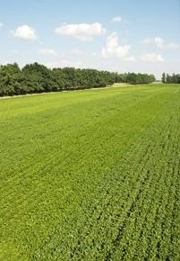 Два урожая в одном поле