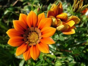 Удобрения для цветов - залог здорового и красивого растения