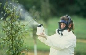 Названы продукты-рекордсмены по загрязнению пестицидами