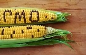 Почему в Украине встретить ГМО-культуры в магазине практически невозможно?