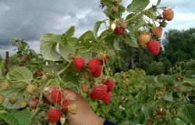 Технология выращивания плодовых и ягодных растений в 2017- 2018 году