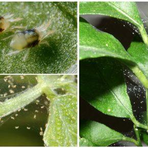 Как бороться с паутинным клещом на комнатных растениях в домашних условиях