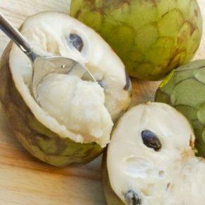 Черимойя - полезные свойства, противопоказания, состав, калорийность. Как едят Черимойю, выращивание в домашних условиях