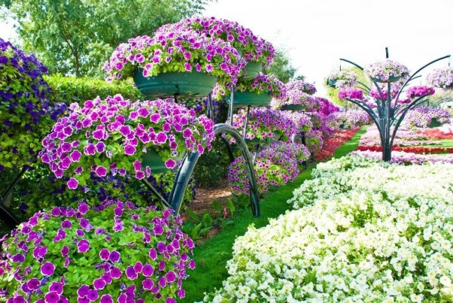 Чтобы летом радовал цветник - рассаду начинайте высевать в феврале