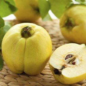 Айва - полезные свойства и противопоказания. Как едят айву, рецепты. выращивание айвы