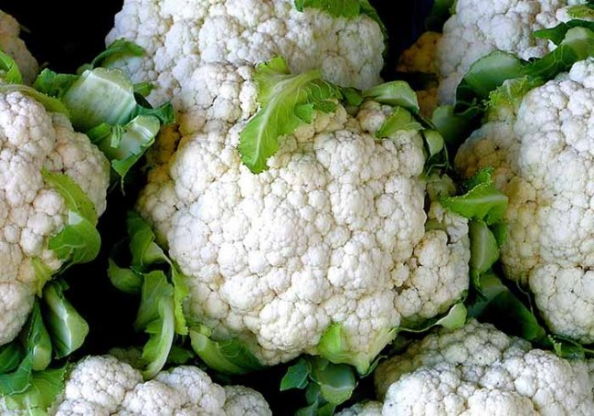 Несколько советов огородникам по выращиванию цветной капусты