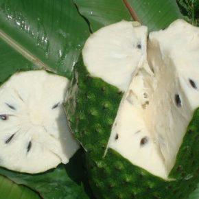 Аннона (гуанабана, сметанное яблоко) - полезные свойства, противопоказания, состав, фото, как растет, рецепты приготовления