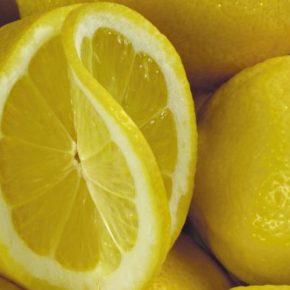 Лимон - польза и вред, состав, калорийность, содержание полезных веществ. Как вырастить лимон в домашних условиях, рецепты приготовления блюд