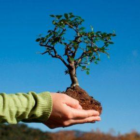 Что нужно знать при осенней посадке плодовых деревьев и кустов?