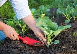 Что сажать на даче в июле в открытый грунт, чтобы осенью получить второй урожай