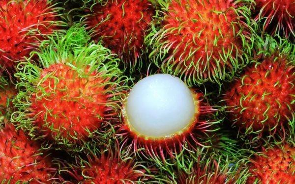 Рамбутан - описание, польза и вред фрукта, состав, калорийность. Как вырастить рамбутан дома и как правильно есть плоды