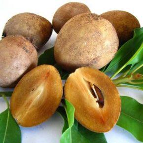 Саподилла - описание растения и фрукта, польза и вред, состав, калорийность, как едят, выращивания дома