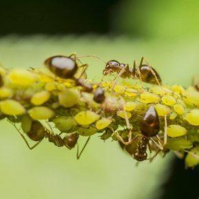 Как избавиться от муравьев в доме или в квартире: причины их появления, действующие средства для борьбы с ними и профилактические мероприятия