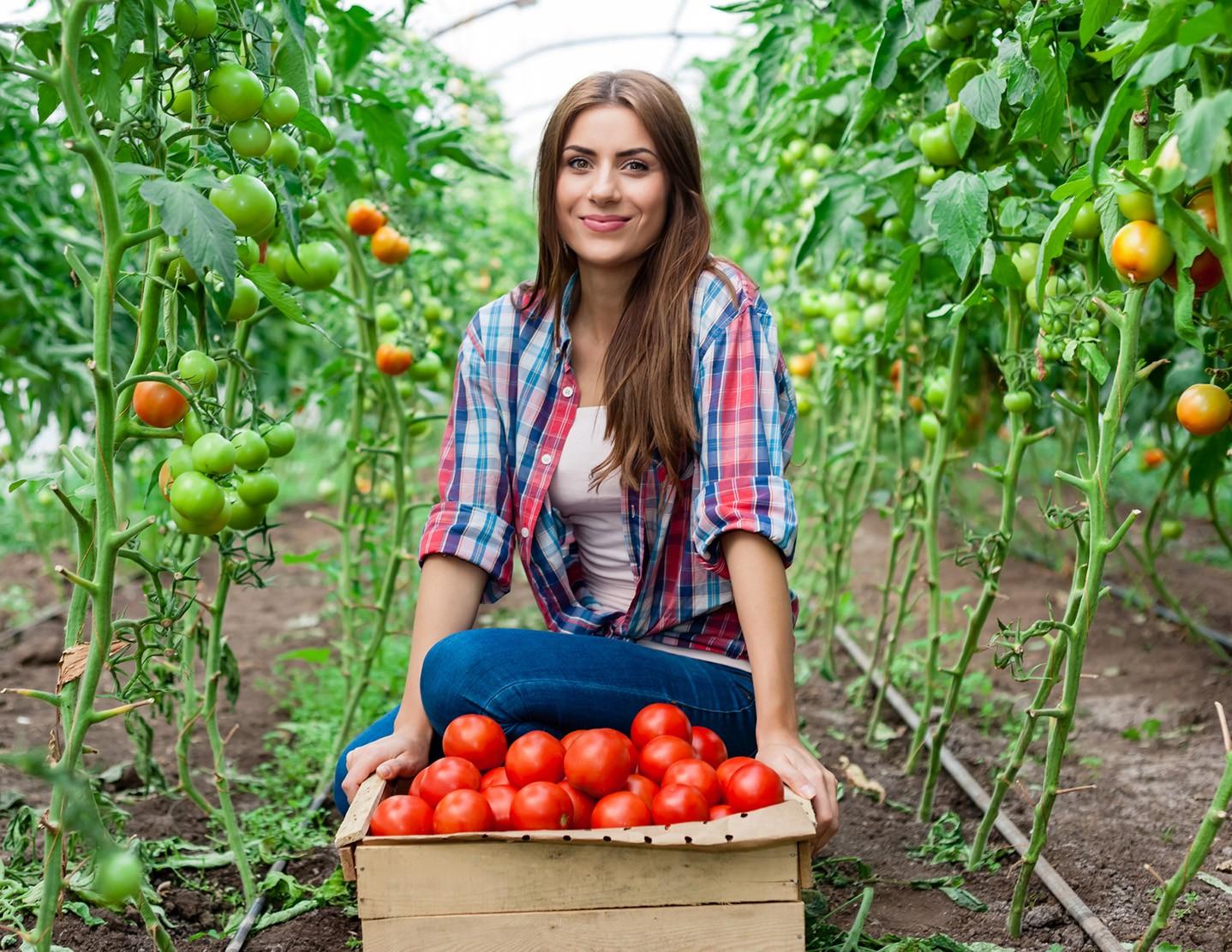 Лучшие 46 сортов томатов для теплицы: описание и отзывы о них (2018)