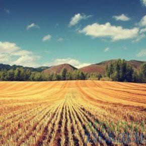 В Раде регистрируют законопроекты о моратории на землю