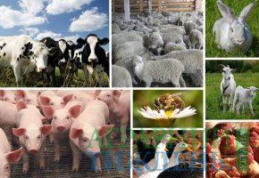Объемы производства продукции животноводства в 2018 году останутся на уровне прошлого года