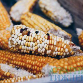 Мировое производство зерновых и их запасы ожидает снижение, однако общие объемы поставок достаточны