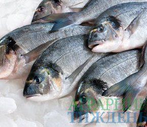 Украина увеличила экспорт мороженой рыбы на 21%