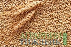 Мировое сообщество засвидетельствовало поддержку УЗА в отмене требования Индонезии относительно «прожарки» пшеницы