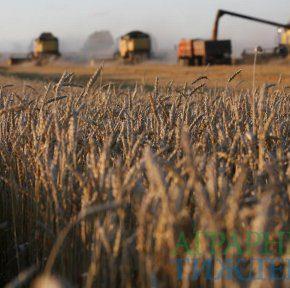 Запасы зерна в Украине увеличились на четверть