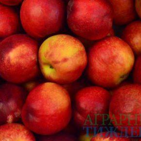Советы, как вырастить яблоко для успешной продажи в ЕС, на Ближнем Востоке и Азии
