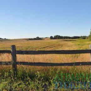 Мораторий на продажу земли: временно-постоянное топтание в тупиках недоразвития
