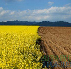 Аграрный комитет рекомендует Верховной Раде продлить запрет на продажу сельхозземель до 2020 года