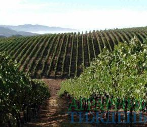 По итогам 2018 года был принят ряд нормативно-правовых актов по развитию отрасли садоводства, виноградарства и хмелеводства
