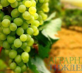 Качество винодельческой продукции в Украине может существенно ухудшиться