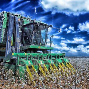 Изменение климата позволяет выращивать на юге Украины хлопчатник и рис