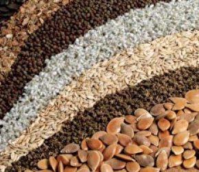 Итоги года: Сформированы новые реестры в области семеноводства
