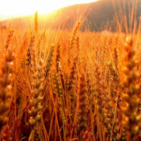 С начала текущего сезона Украиной экспортировано более 25 млн тонн зерновых