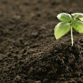 Украина не контролирует более 80% государственных сельхозземель