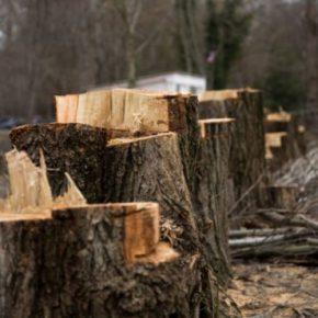 В Украине ужесточили наказание за контрабанду леса