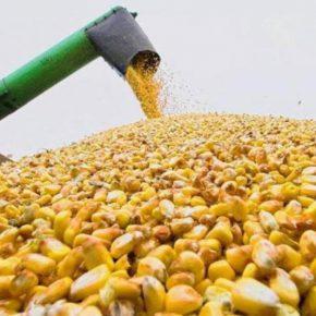 Украина – в ТОП-5 крупнейших экспортеров агропродукции в ЕС