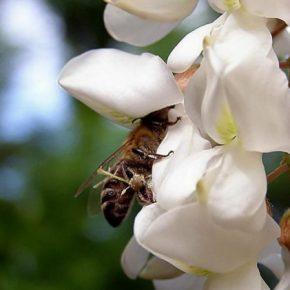 Пасечники Украины смогут страховать пчел с 1 марта 2019 года