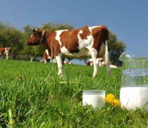 Итоги года: В Украине увеличилась продуктивность коров и производство молока экстра и высшего сортов