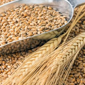 Отмена критических для зерновой отрасли Гостов перенесено на 2-3 года