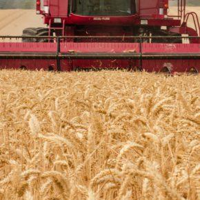 Правительство утвердило критерии оценки рисков в сфере охраны прав на сорта растений