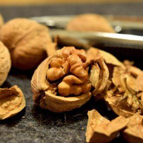 Для получения большей прибыли горіхівникам необходимо наладить хранения продукции