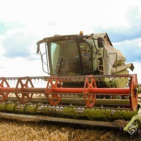 В Крыму отчитываются о рекордных урожаях зерновых