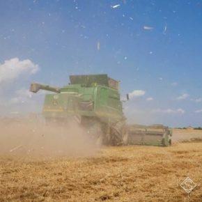В Украине сельхозпроизводство выросло — Госстат