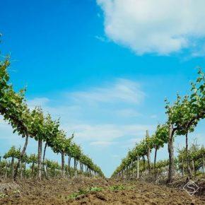 Вскоре аграрии получат 120 млн грн компенсации за приобретенный посадочный материал