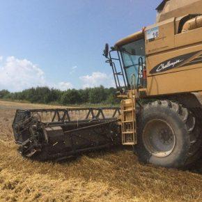 На Черниговщине собран урожай ранних зерновых почти на 80% площадей