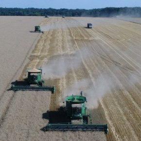 Ukrlandfarming отчитывается о высокое качество собранного урожая пшеницы