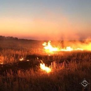 Сжигание стерни является причиной катастрофических последствий дня почв